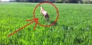 This Dog Frolicking Through a Field Will Remind You of the Simple Pleasures in Life!!