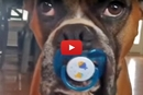 This Dog Has Something In His Mouth... Wait Until You See What It Is