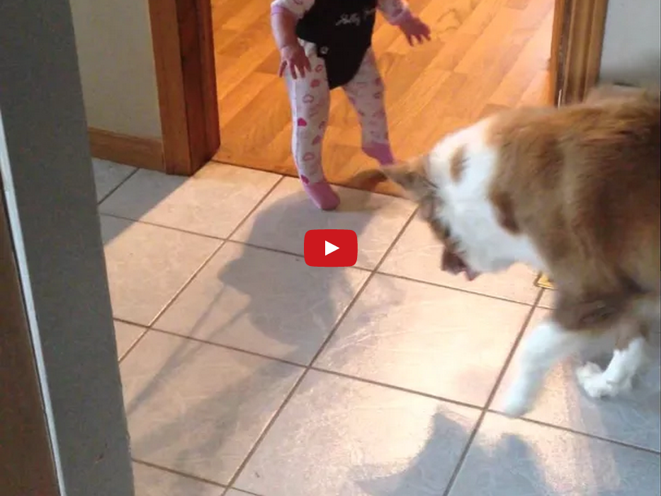 This Dog is Confused by a Baby's Shadow and the Result is TOO CUTE!!!