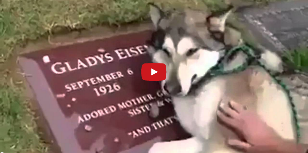 This Grieving Dog Proves Pets Are People Too! So Touching and Sad!!