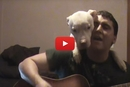 This Guy Plays His Guitar And The Pitbull Has The Cutest Reaction!