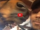 This Guy Tries to Take a Selfie With a Horse and Gets an Adorable Surprise!