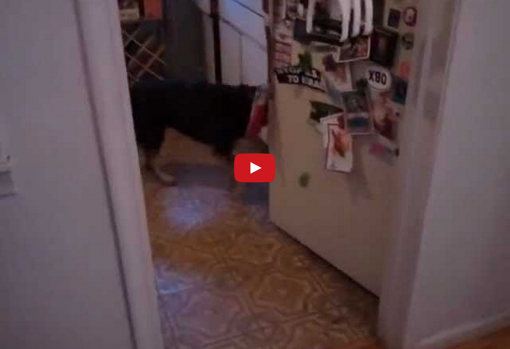 This Helpful Dog Can't Wait to Play Frisbee! You Won't Believe How Smart This Dog Is!!