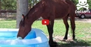 This Horse Loves the Water and It's HILARIOUS! Try Not to Smile!!