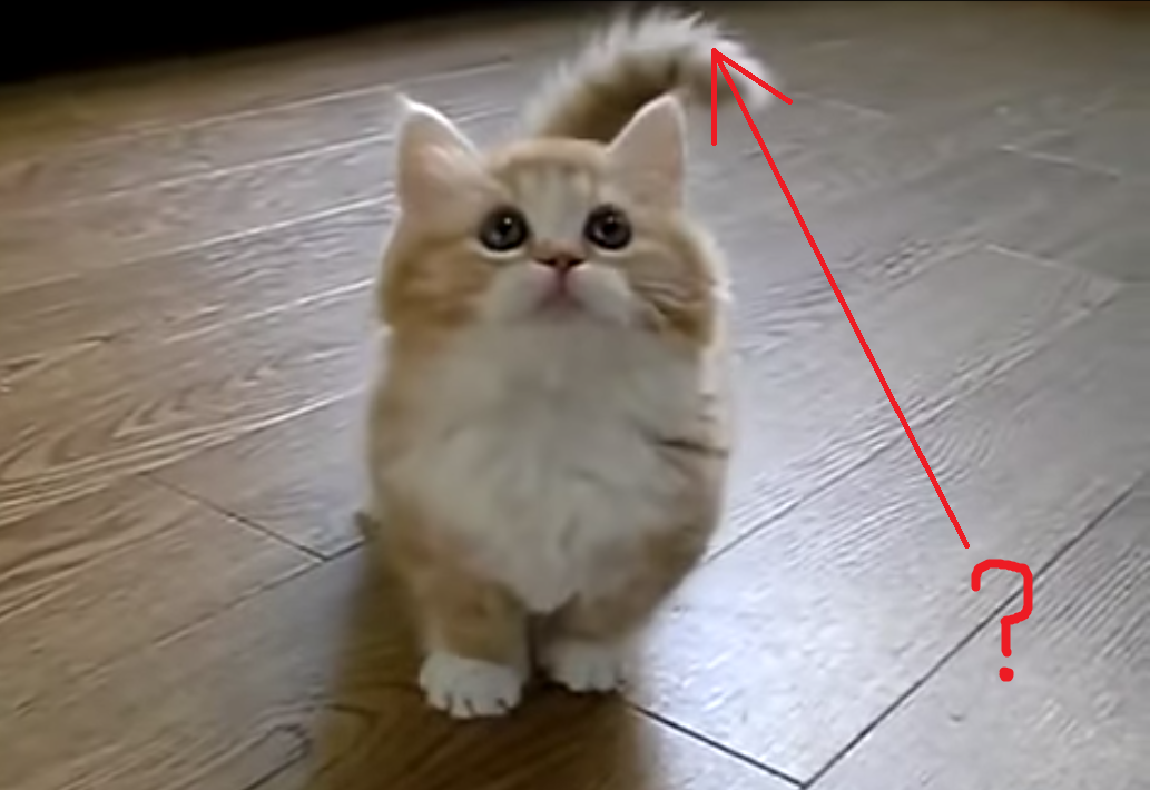 This Kitten's Wide-Eyed Expression Will Melt Your Icy Heart! Watch Her Play in this Adorable Video!!