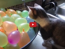 This Kitten Tries to Play With Water Balloons and Has the Cutest Reaction!