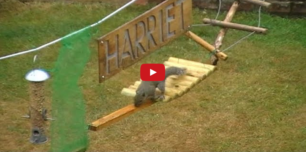This Man Built an Obstacle Course for the Squirrels in His Backyard and It's AMAZING!!