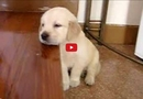 This Puppy Just Can't Stay Awake! This is the Cutest Thing You'll See All Day!!