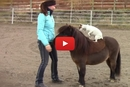 This Rescued Dog And Horse Are Too Cute!