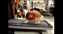 This Smart Dog Avoids Treadmill Workout... Until His Owner Catches Him! Watch How Fast He Gets Back to It!!