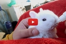 This Teeny Tiny Bunny Drinks From the Cutest Baby Bottle Ever!