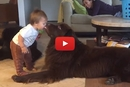 This Toddler Makes The Funniest Face When His Dog Kisses Him!