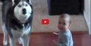 This Video of a Baby and Dog Howling Together Will Make You Day!!