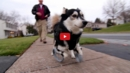 This Video of a Disabled Dog Running for the First Time Will Leave You in Awe. I'm in Tears!!