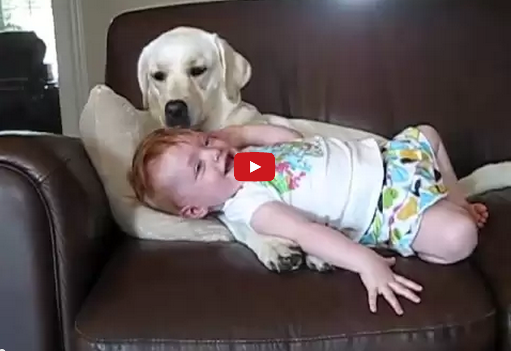 This Video of a Dog and a Baby is Particularly Cute