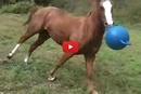 This Young Horse Acting Like a Dog is Absolutely Adorable!