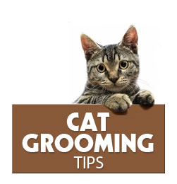 Tips For Grooming Your Cat