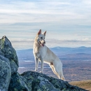 Top 10 Dog Friendly National Parks