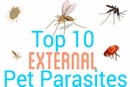 Top 10 External Pet Parasites