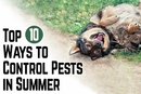 Top 10 Ways to Control Pests in Summer