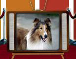 Top TV Pet Stars