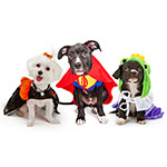 Trick-or-Treats For Dogs & Cats