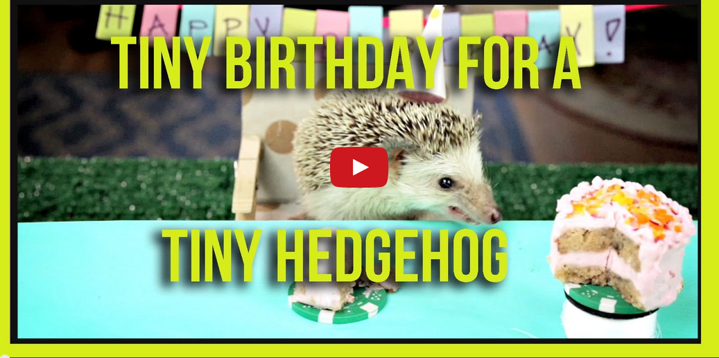 Two Hamster and a Hedgehog Eat Miniature Cakes- And It's Pretty Fun to Watch
