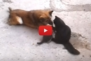 Wait Until You See Who This Mama Cat Introduces Her Kittens Too!