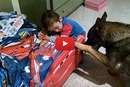 Watch Baron The German Shephed Say Goodnight to His Tiny Human