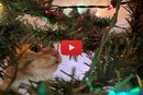 Watch Cole & Marmalade Get Into The Catmas Spirit!