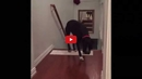 Watch How This Dog Overcomes His Unusual Fear of Doors in an Equally Unusual Way!