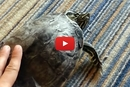 Watch How This Turtle Reacts To Having His Shell Scratched