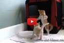 Watch This Adorable Kitten Go Bonkers While Playing With His Siblings!