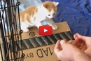Watch This Adorable Kitten Jump Into This Man's Hands