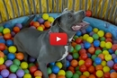 Watch This Adorable Shelter Dog Play In A Ball Pit For The First Time