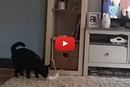 Watch This Cat Surprise His Owner With This Trick