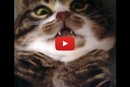 Watch This Cute Kitty Turn Into A Vampire When Her Tummy is Rubbed!