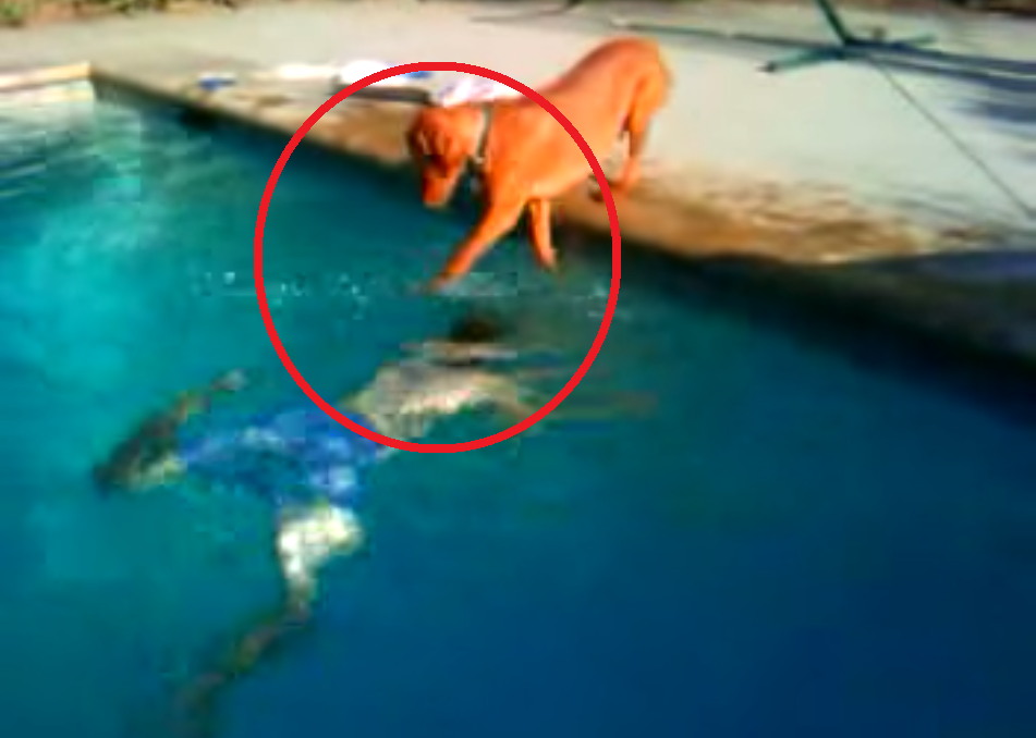 Watch This Dog Overcome His Fear of Water in This Amazing Video! Utterly Inspiring!!