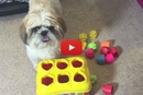 Watch This Incredibly Smart Dog Perform Amazing Logic Tricks with Ease!