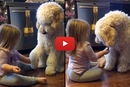 Watch This Little Girl Teach Her Dog This Heartwarming Trick