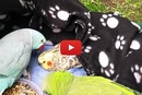 Watch This Precious Bird Help His Friend Feel Better!