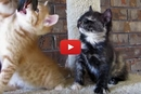 Watch This Tiny Kitten Fall Asleep Sitting Up!