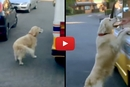 Watch Zack The Golden Retriever Buy Ice Cream All Buy Himself!