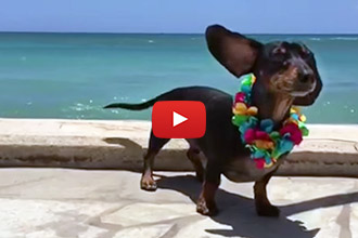 Watching These Adorable Wiener Dogs at The Beach Will Make Your Day!