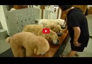 Watching These Well-Mannered Dogs Will Fill You with a Humbling Sense of Reverence!!