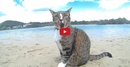 Watching This Cat and These Dogs at the Beach is Guaranteed to Make You <i>Happy</i>!!