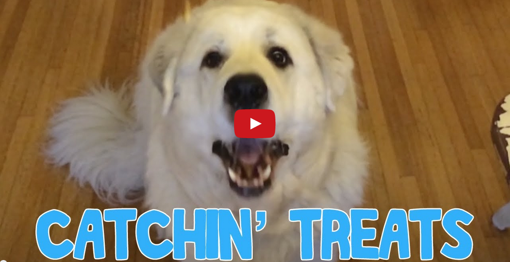 Watching This Dog Learn to Catch Treats Will Leave You in Stitches! Too Funny!!