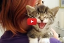 We've Heard A Lot Of Cute Kittens, But Listen To This Kitten's Meow!