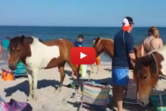 We Aren't Sure Where All These Horses Came From, But They Want To Join The Beach Fun!