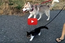 We Thought Cats Didn't Like Walking On Leashes... Until We Saw This!